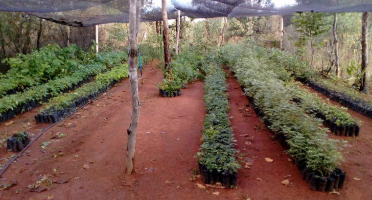 Plantas nativas e ornamentais